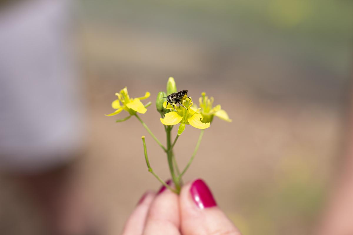 api solitarie