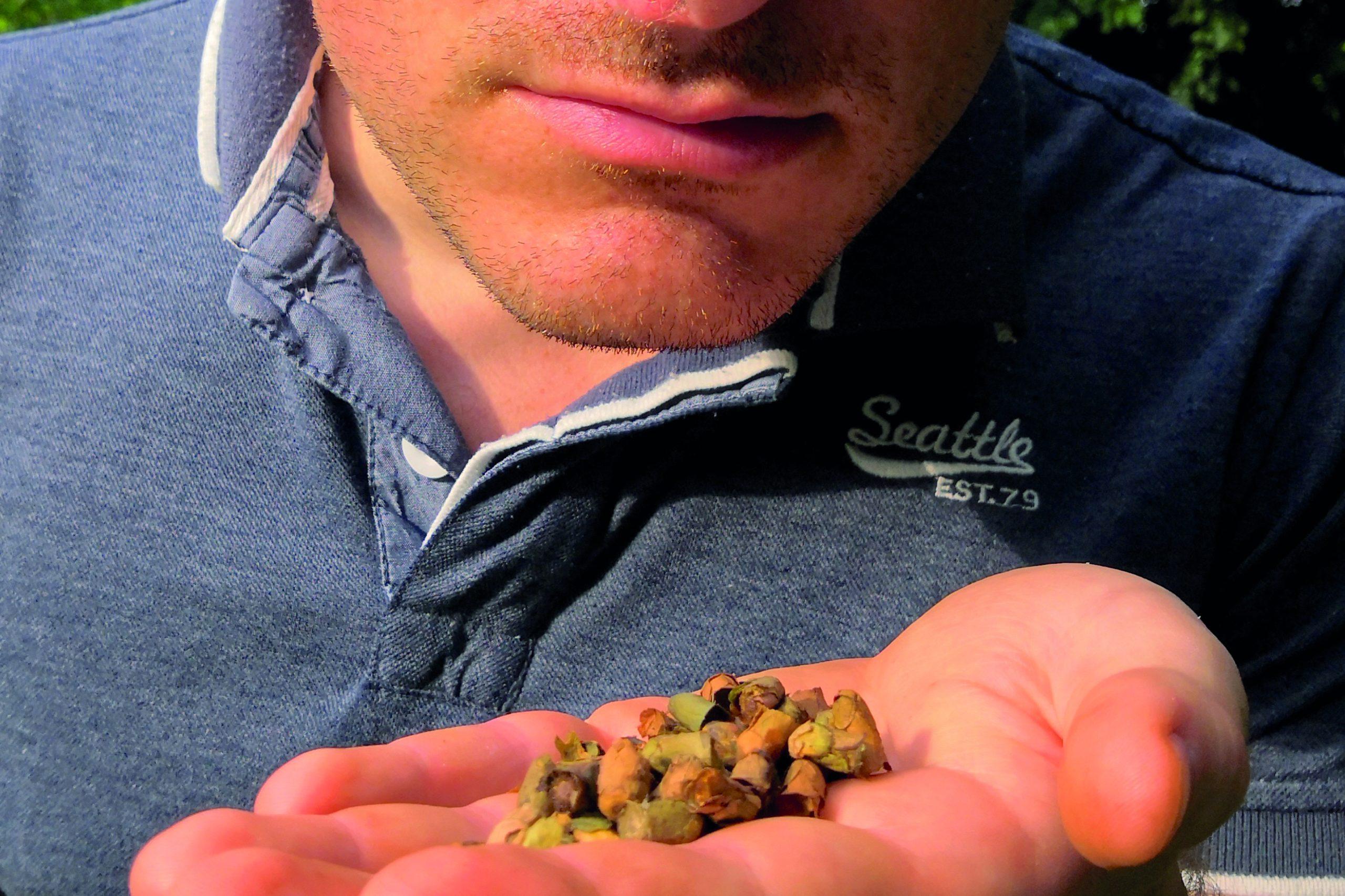 profumo cellette api solitarie Megachile rotundata